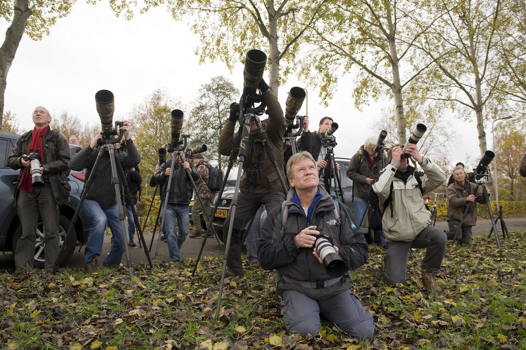 Fotografen op jacht naar de Sperweruil